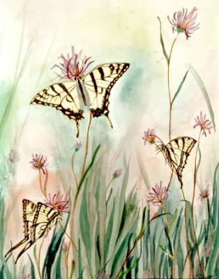 Monarchs Dining with Echinechea