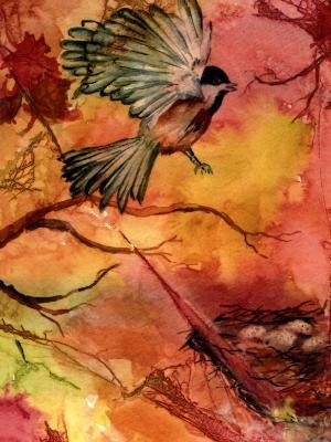 Black Cap Chickadee on a Nest