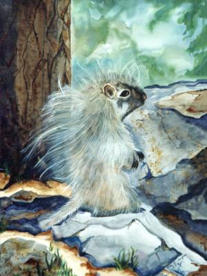 Dart, Baby Porcupine