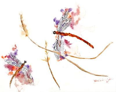 Dragonflies in the Grass